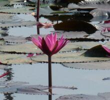 Pink Water Lily Wild Garden Sticker