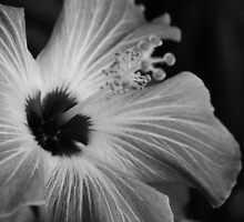 B&W Flower by molly1388