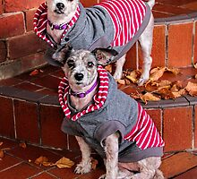 HOODY POOCHES by Helen Akerstrom Photography