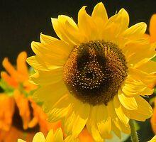Sunshine Smiles by NatureGreeting Cards ©ccwri