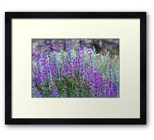 Color in the High Desert Framed Print