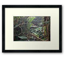Under Undergrowth  Framed Print