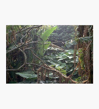 Under Undergrowth  Photographic Print