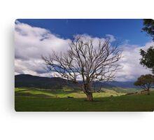 Alpine Tree Canvas Print