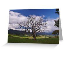 Alpine Tree Greeting Card