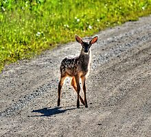 Encounter with a Fawn by Skye Ryan-Evans