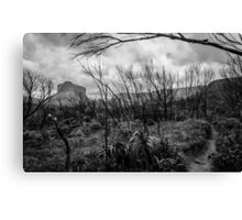 Burned forest Canvas Print