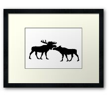 Moose Bull And Cow Framed Print