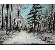Snowy Forest Photographic Print
