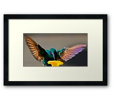 Tom Thumb, Up Close And Personal Framed Print