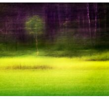 Mitchell Park ~ the impressionist's view II Photographic Print