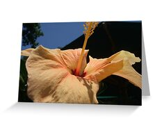 Beautiful Flower Photograph  Greeting Card