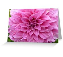 Flower Photo Close Up Greeting Card