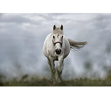 white horse Photographic Print