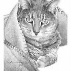 cat in a blanket drawing by Mike Theuer