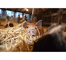 Oink! Photographic Print