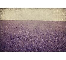 Purple field Photographic Print