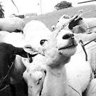 Sheep - Meet the Neighbours by RedSteve