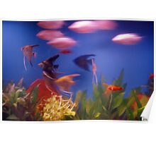 Fish at High Speed Poster