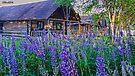 Eagle Lake Sporting Camps (Michaud Camps) by Caleb Ward