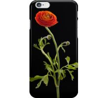 Dancing Ranunculus I iPhone Case/Skin