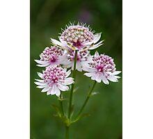 Flower Jewels Photographic Print