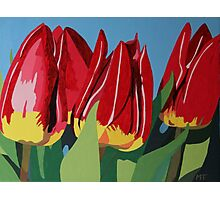 Red & Yellow Tulips Photographic Print
