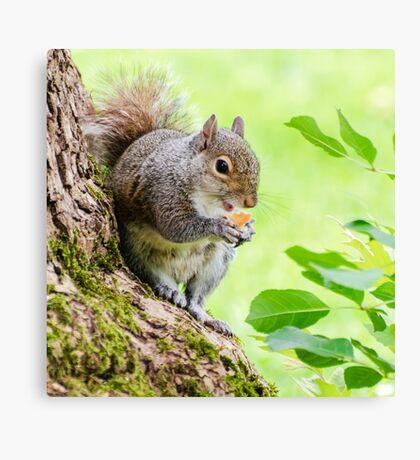 Smiling Squirrel Canvas Print