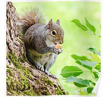Smiling Squirrel Poster