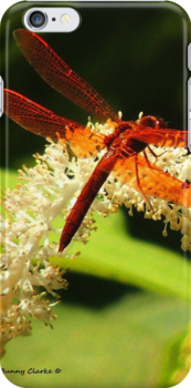 Flame Skimmer by Bunny Clarke