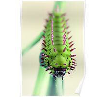 Spiny critter Poster