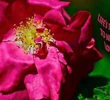 Roses mean love 1 by Carolyn Clark