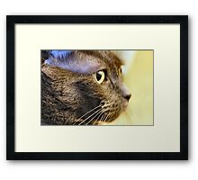 Serious Mimsy Framed Print