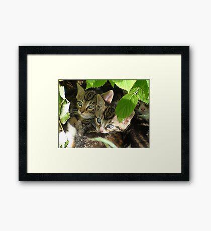 Kittens hiding Framed Print