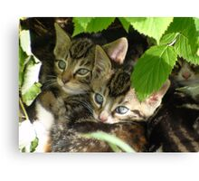 Kittens hiding Canvas Print
