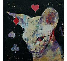 Sphynx Cat Lover Photographic Print
