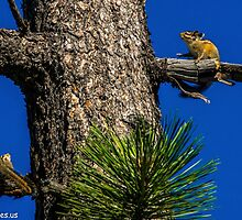 Skiddish Chipmunks  by Richard Bozarth
