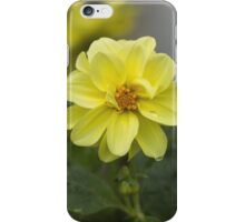 Yellow Dahlias iPhone Case/Skin