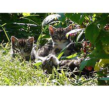 Kittens in morning sun Photographic Print