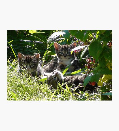 Kittens in morning sun Photographic Print
