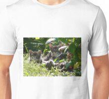 Kittens in morning sun Unisex T-Shirt