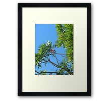 two dragonfly friends Framed Print