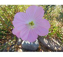 love of pink flower Photographic Print