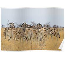 Zebra - African Wildlife Background - Feel the love  Poster