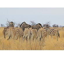 Zebra - African Wildlife Background - Feel the love  Photographic Print