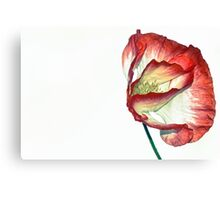 One White & Red Poppy Canvas Print