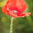 Poppy by JEZ22