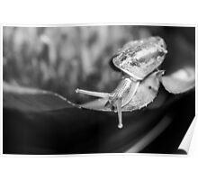 Monochrome macro shot of a snail on an exotic plant Poster