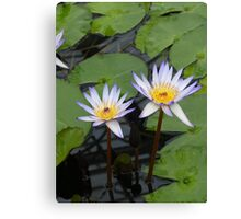 Beautiful Purple TIpped White Lilies Canvas Print