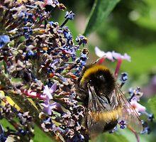 Last of the Lavender Bumble Bee by Vanessa  Warren